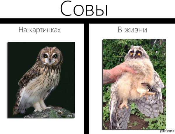 Серьёзно :) Материал из недавнего поста, как чувак поймал сову.
