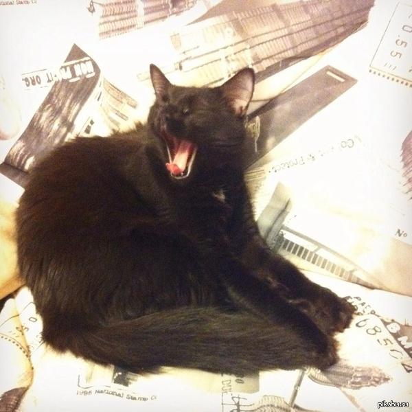 Всем котиков и хороших снов :3