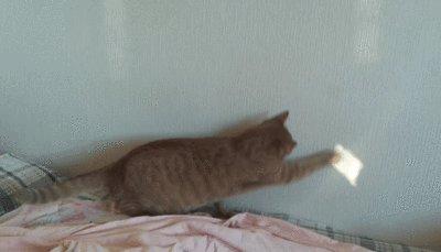 Что-то пошло не так Решила опробовать смарт-режим телефона на своем котейке, забыла убрать одну важную галочку :)
