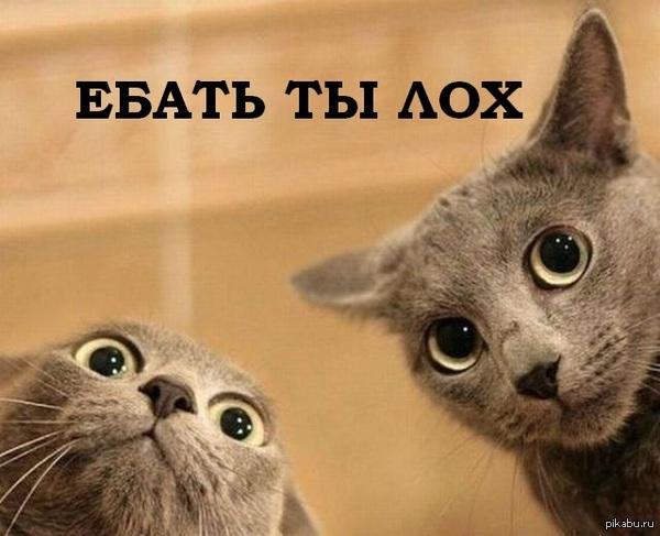 domestic animal cat information