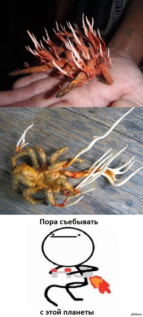 Кордицепс. Остановите планету, я сойду. своими собственными. После смерти организма, трупик медленно превращается в гриб.  Некоторые виды кодицепса способны управлять поведением хозяина.