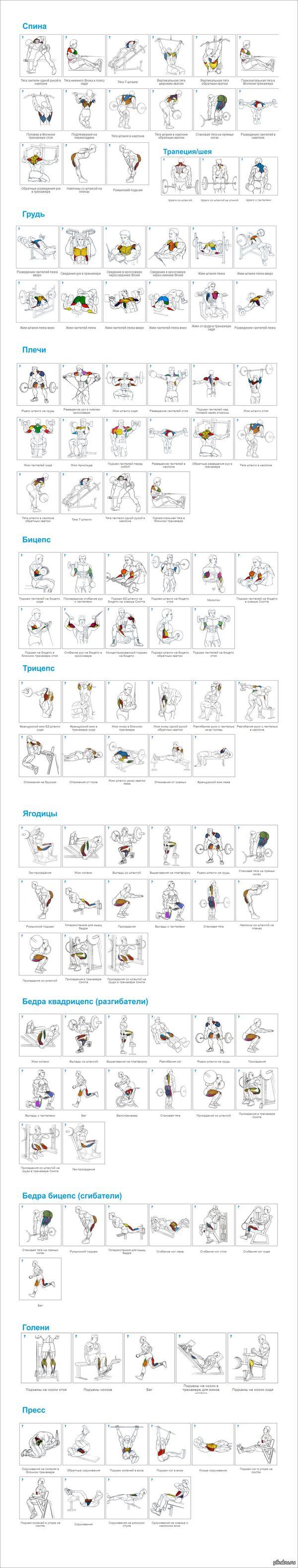 Схемы упражнений для мышц 63