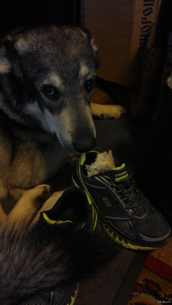 Заведи собаку, говорили они Просто кость собаки в моем кроссовке.