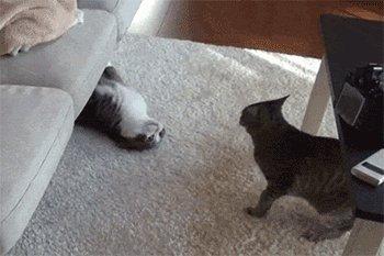 самовыдвиженец рано утром из дивана //  выползает жуткий зверь //  дай скорей ему по морде //  и за дверь