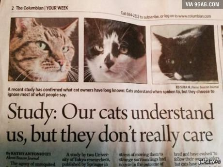 What is it about cats
