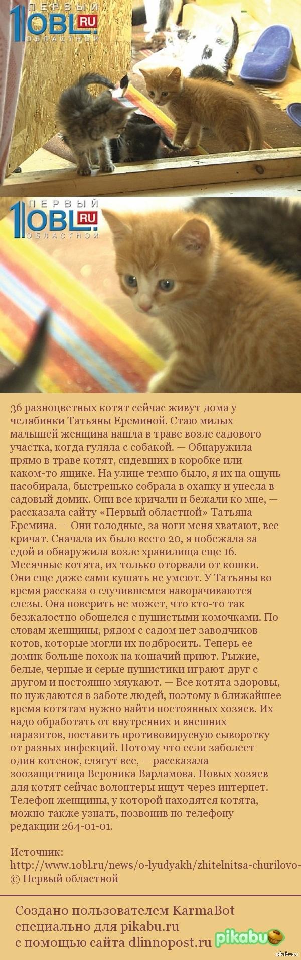 В селе Чурилово, Челябинской области кто-то выбросил 36! котят. Может кто  захочет помочь . Видео внутри.
