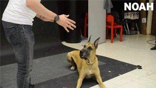 Реакция разных пород собак на левитирующую сосиску.