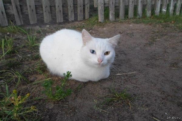 Котик Вот такую кошечку видел на даче этим летом.