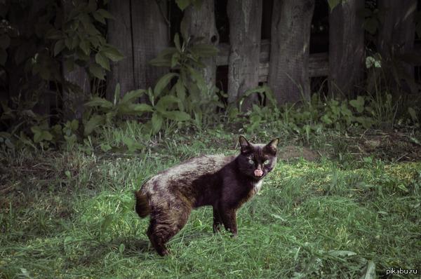 Очень люблю фотографировать котиков хотя мои фото не сильно радуют пикабу..попытаюсь еще раз :)