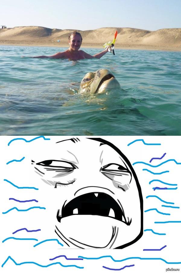 Черепаха знает толк в отдыхе на отдыхе