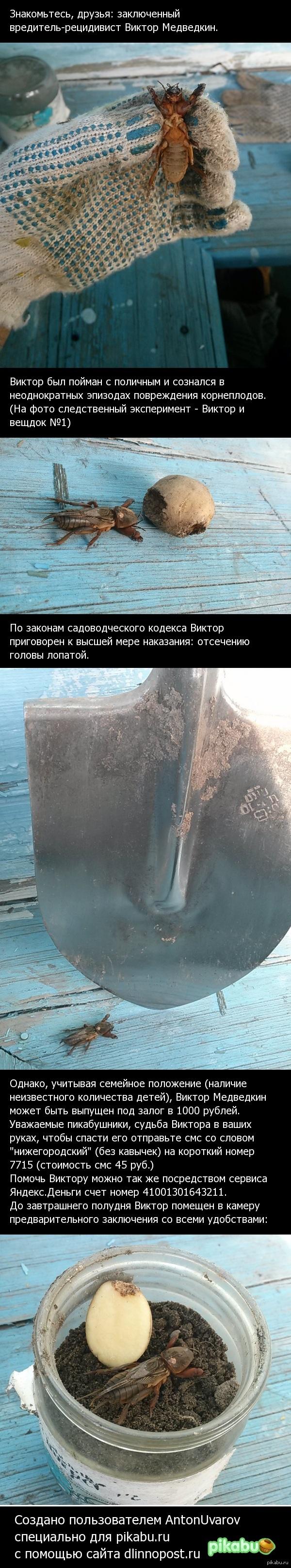 Спасти заключенного Виктора Медведкина