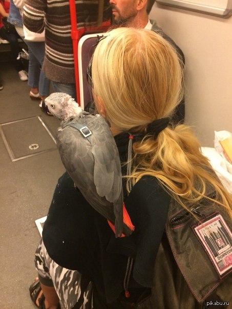 Просто попугай в метро Ехала сегодня в пражском метро и вот такую картину увидела... попугай сидел спокойно все полчаса, что мы ехали.