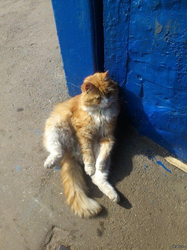 Такого крутейшего кота встретил сегодня на работе :) Рыжий милаш х)