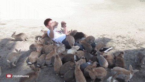 Осторожно! Кролики-убийцы!