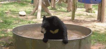 Мишка бэтмэн купается 5.3 Мб