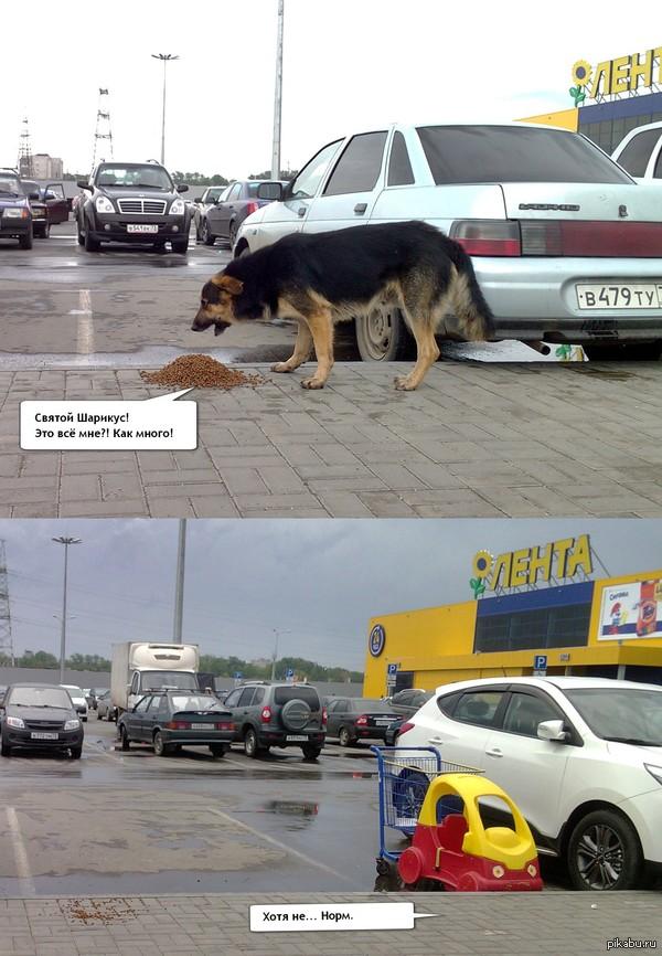 Гора добра Кто-то у Метро высыпал целую упаковку сухого корма.  Собакен не верит своему счастью.