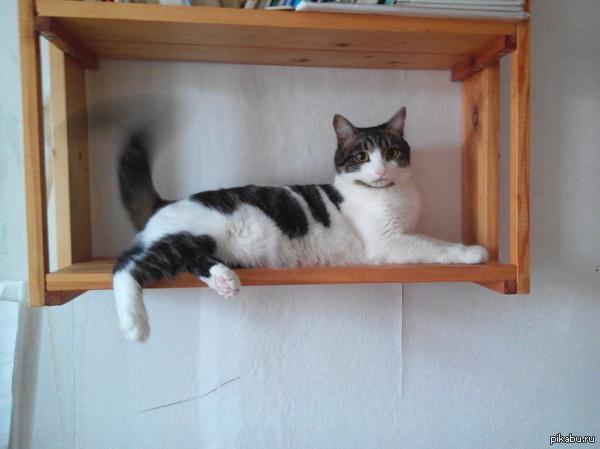 Котовентилятор В жару кот подрабатывает вентилятором.