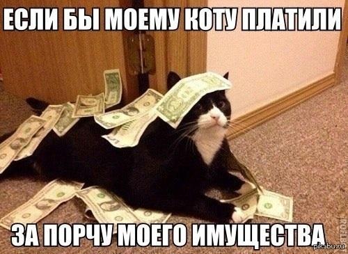 Типичный кот На этот раз жертвой пали новые обои в коридоре...