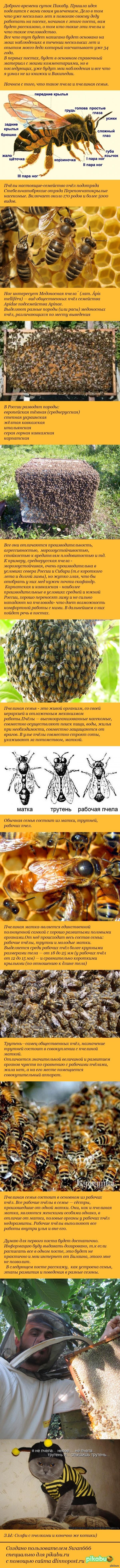 """""""Эти неправильные пчелы"""" Часть первая. Вопросы, предложения, критика в комментарии. минуса туда же.  Первый длиннопост, не обессудьте. Спасибо)"""
