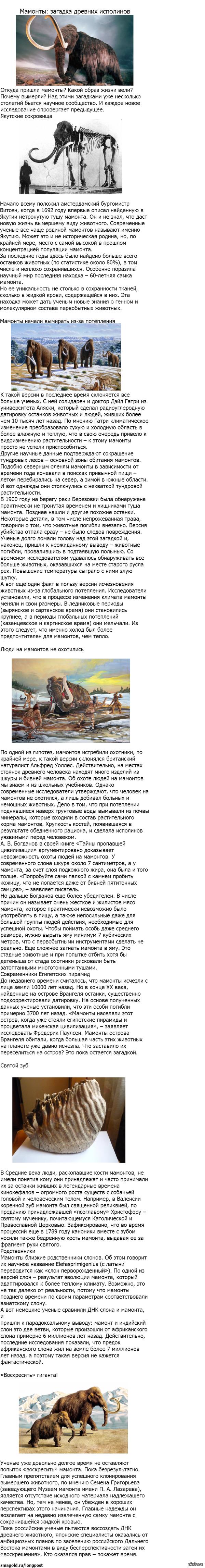 Мамонты: загадка древних исполинов