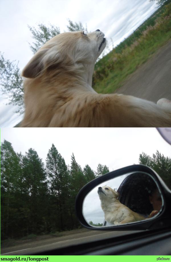 Собакен любит скорость