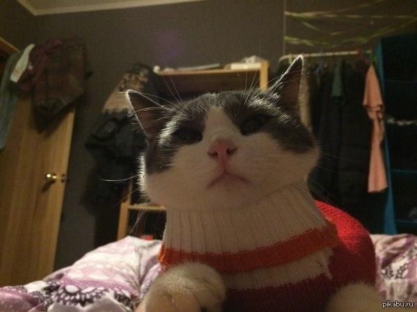 Прошу помощи!1 В связи с срочным переездом ищу новых хозяев своему коту. Фото и мои контакты в коммах. Поднимите , потом утопите . Минусы внутри, пжлста!!