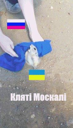 Россия просто хочет помочь