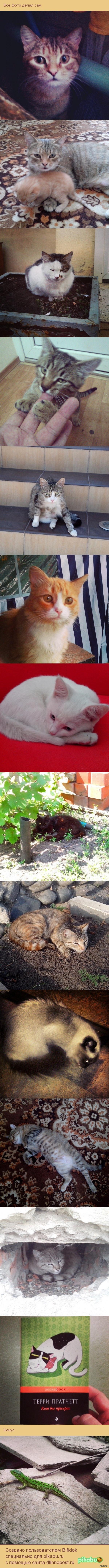 Кошки, которых я фотографировал. Instagram: Bobroed, если кому интересно.