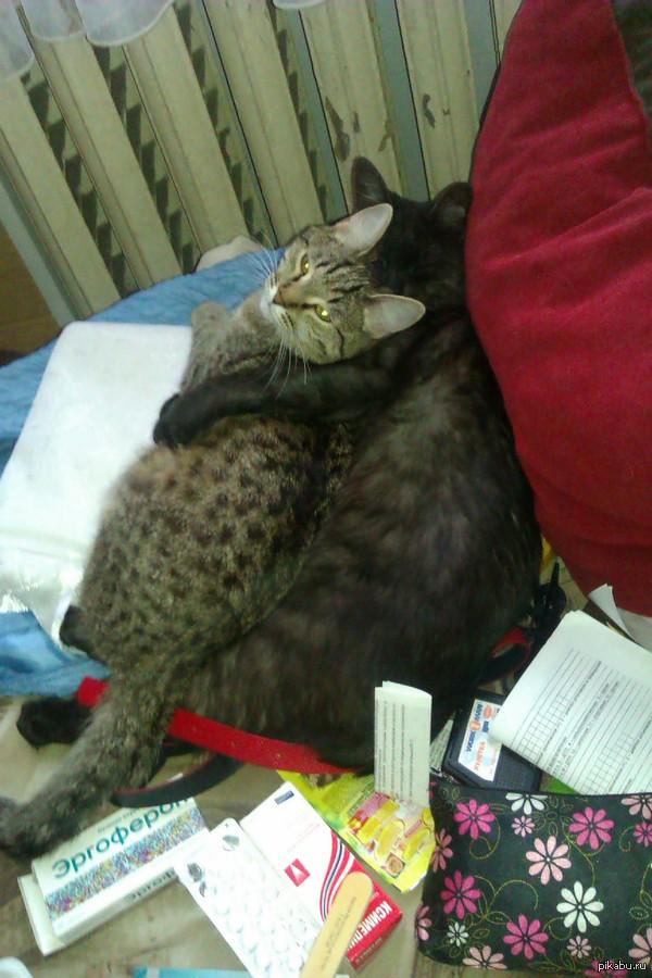 Кошко-обнимашки! Когда полосатую только принесли в дом, они готовы были друг друга убить.