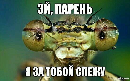 Человек съедает за год, в среднем, около 430 комариков, жучков и паучков.