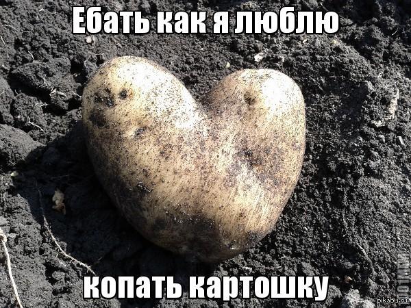 подмосковном веселые картинки про копание картошки можно