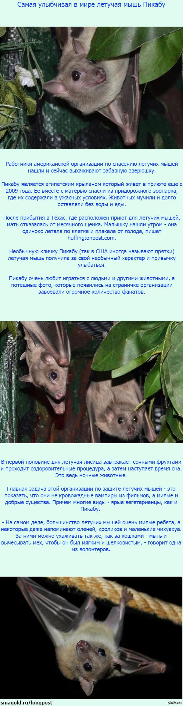 В Техасе живет самая улыбчивая в мире летучая мышь Пикабу