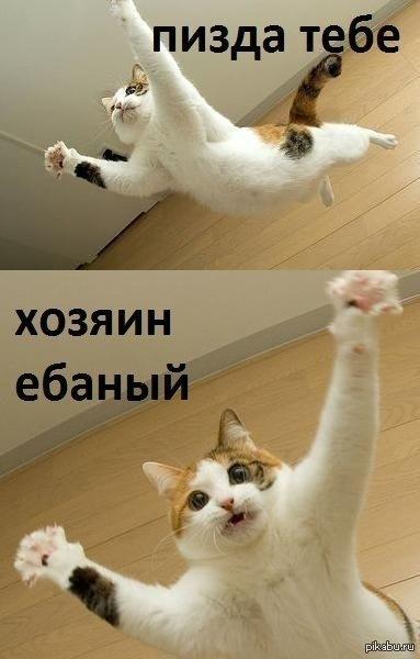 Когда мусолил кота весь день и наступила ночь ...