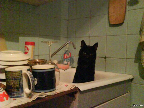 """В поддержку пятничного тега """"Моё"""". Вот такой вот котейка живет со мной уже 8 лет. Мой первый пост на пикабу и я слышал от кого-то что тут любят котиков. Простите за качество, фото сделано на SE w660i"""