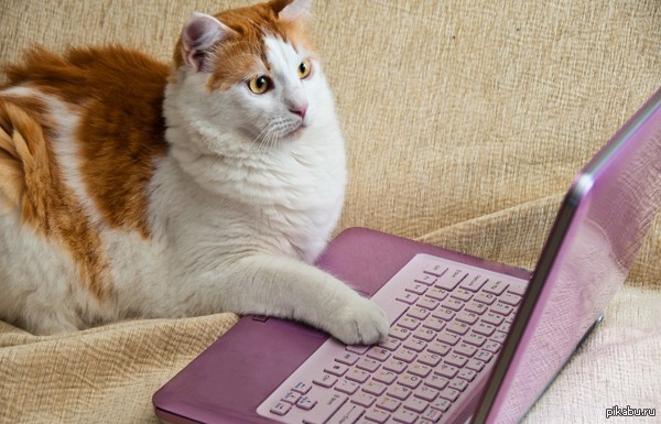 13% британских кошек имеют свою страницу в Facebook В Великобритании, собственная страница в Facebook есть у 13% британских кошек. 9% собак присутствуют в Twiiter и еще у двух процентов есть собственные блоги.