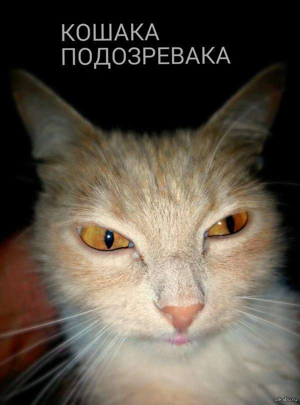 """Кошака подозревака Пытался сфоткать кошку ребенку для домашнего задания,получилась вот такая подозревака.  В ответ на пост <a href=""""http://pikabu.ru/story/kotyakaulyibaka_3_2666473"""">http://pikabu.ru/story/_2666473</a>"""