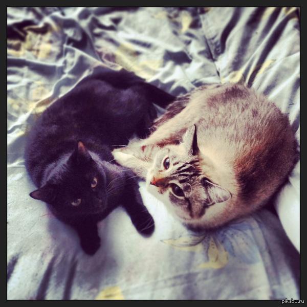Котики) Этих двоих лучше наедине не оставлять, разнесут всю квартиру...