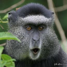 В мире животных https://www.youtube.com/watch?v=abbBYHlGRf0
