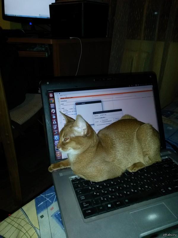 Котейка-программист Котейка тоже может писать код, и даже запускать компилятор