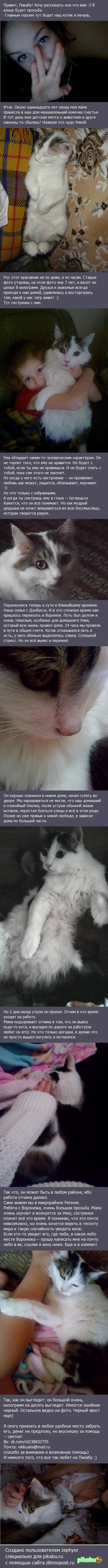 Помогите найти котика! Первый пост, ребята. Надеюсь на ваше понимание. <3