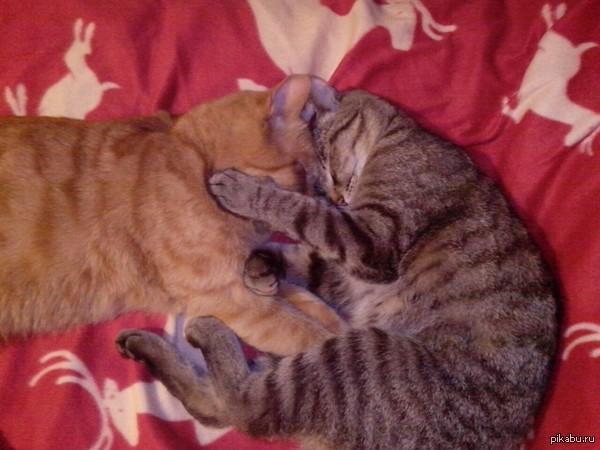 Няшки-шняжки Вот так вот сладко спят мои мальчики
