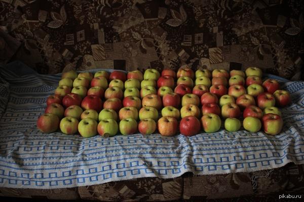 Сибирские яблочки... В Поддержку Пятничного #Моё Это далеко не весь урожай с одного маленького деревца.