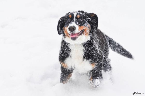 В ожидании зимы. Вот таким был Тайкин первый снег прошлой зимой :) Радости не придела!