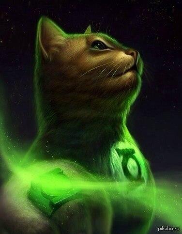 Супер котыыы... Супер котыыы...