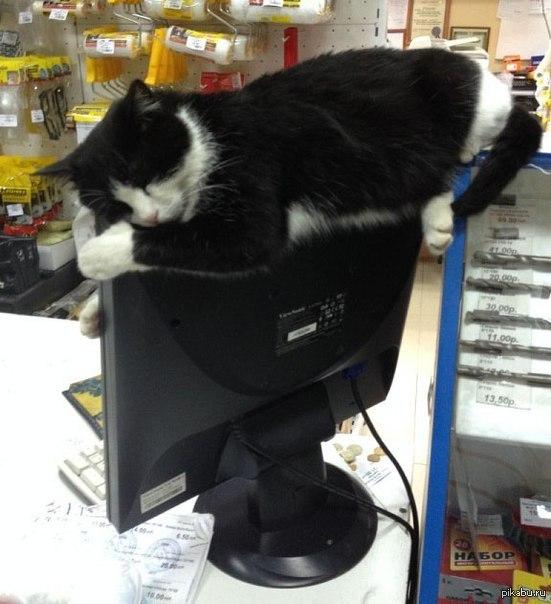 Кот не ищет легких путей