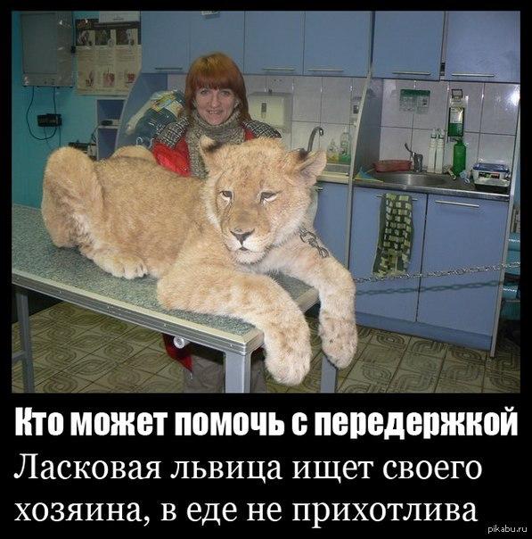 Прикол от гомельских волонтёров!)