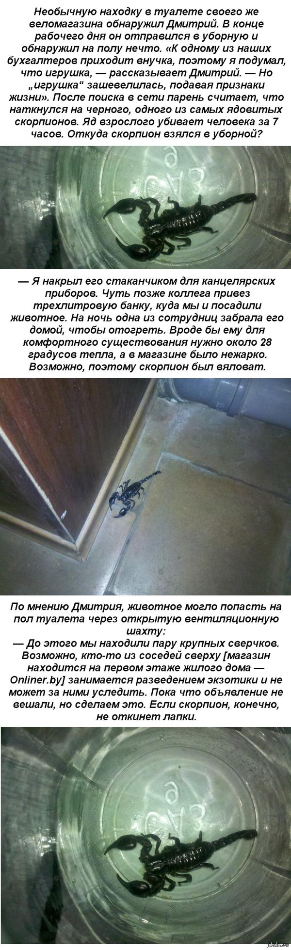 Обнаружил в туалете НЕЧТО ... Минчанин в туалетной комнате магазина наткнулся на скорпиона)