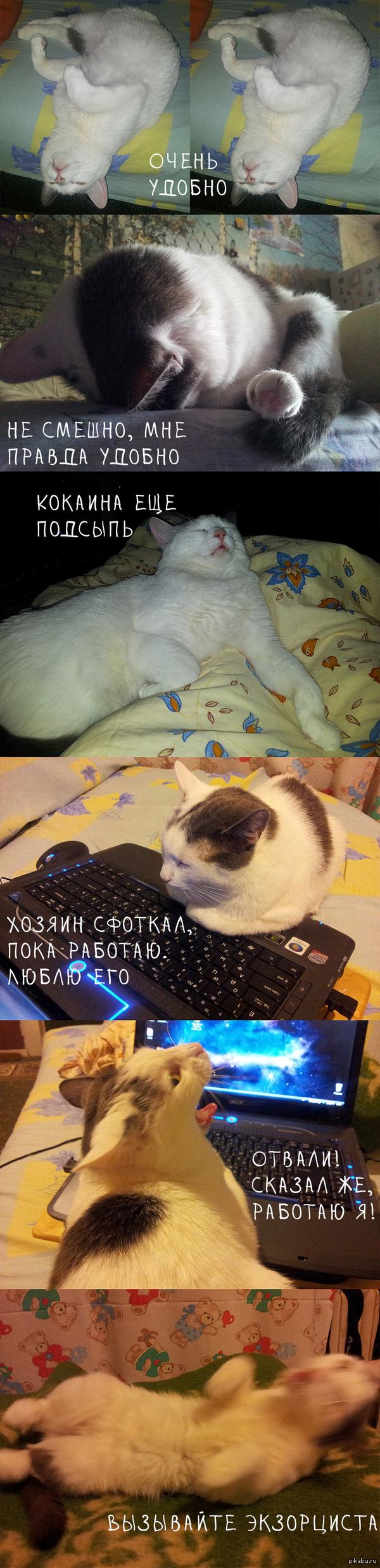 Чтоб я так жил или хочу быть котом. Подборка нелепых и эпичных поз моей котейки.