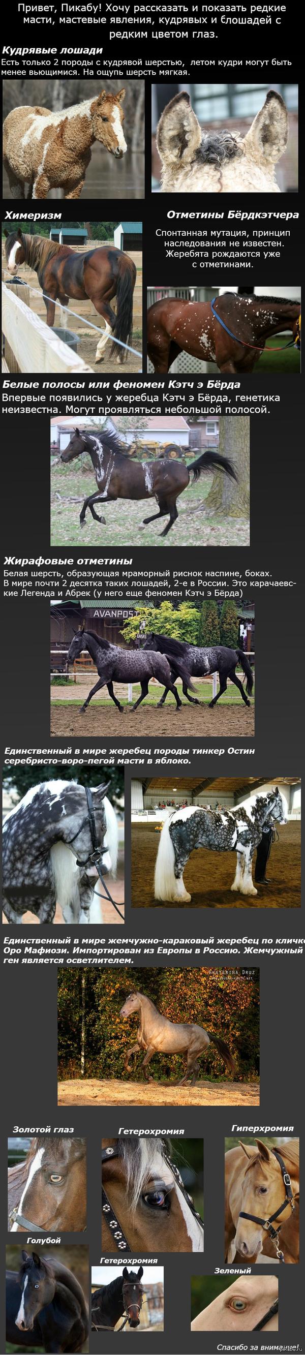 Редкие масти и цвета глаз у лошадей. Кратко о самых редких.