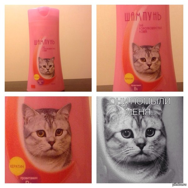Этикетка шампуня для кошек